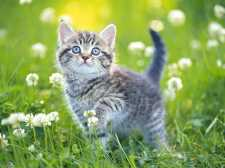 Kittens Jigsaw