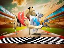Çılgın köpek yarış oyunu 2020