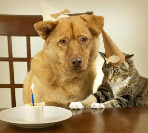 Pisici: 10 imagini cu pisici, Petrecere in doi