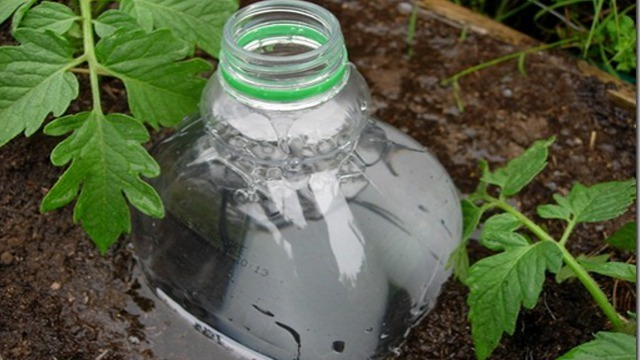 Repurpose A Plastic Bottle Into A DIY Irrigation System