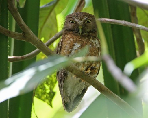 A picture of an owl, judging all of us.