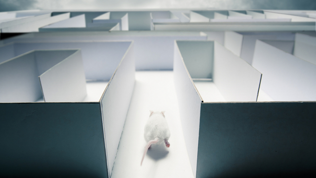 Neuroscientists successfully control the dreams of rats. Could humans be next?
