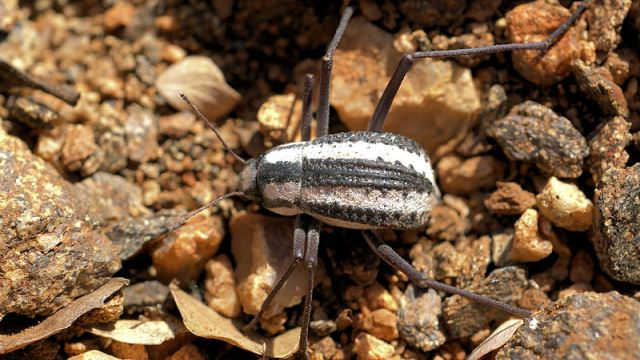Self-filling bottle borrows beetle's trick of harvesting water from the air