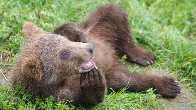 Orphaned Baby Bear Cubs Refuse to Sleep This Winter Just