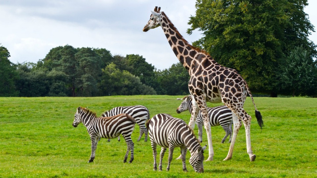 southafrica - South Africans Have Accidentally Been Eating Giraffe and Kangaroo Meat