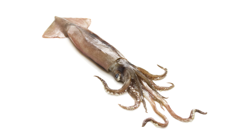 Fishmonger Finds Live Bomb Inside Squid's Stomach