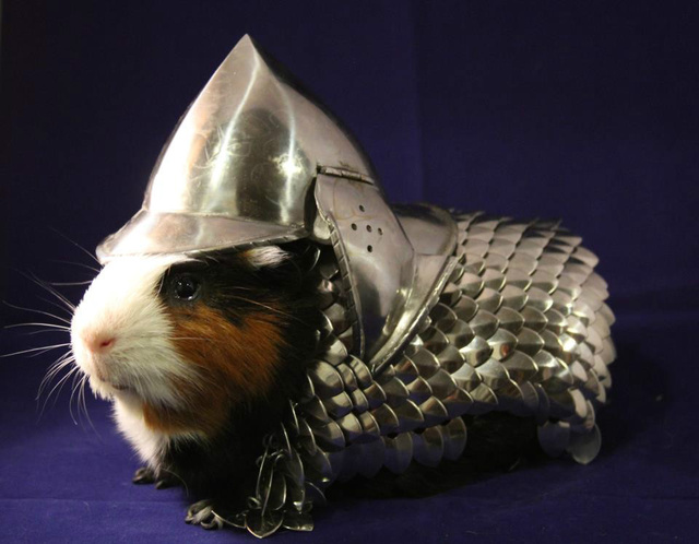Keep your guinea pig protected with a rodent-sized suit of armor