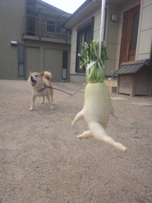 How a Japanese Radish Became an Internet Hero
