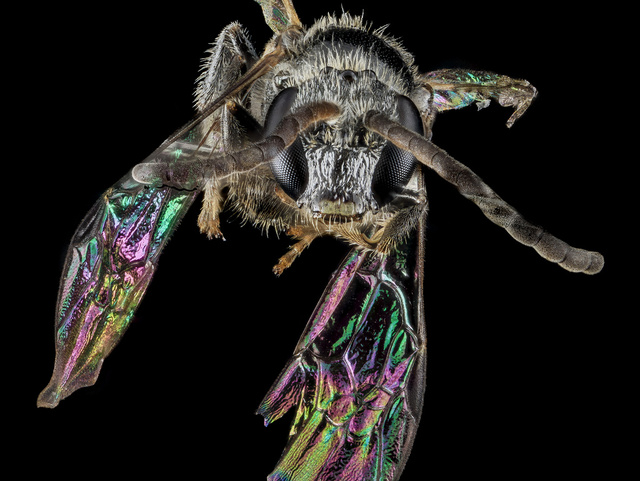 11 Glittering Insects From the US Geological Survey's Bug Collection