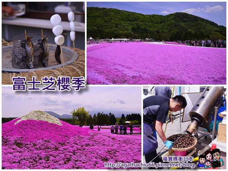 [日本東京富士芝櫻季攻略] 教你怎麼衝一年一度富士芝櫻季,以及富士山景觀飯店總整理