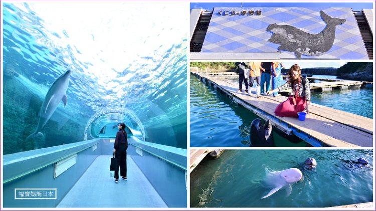 【和歌山景點】太地鯨魚博物館 太地町立くじらの博物館,和悠游在天然海灣內的海豚玩