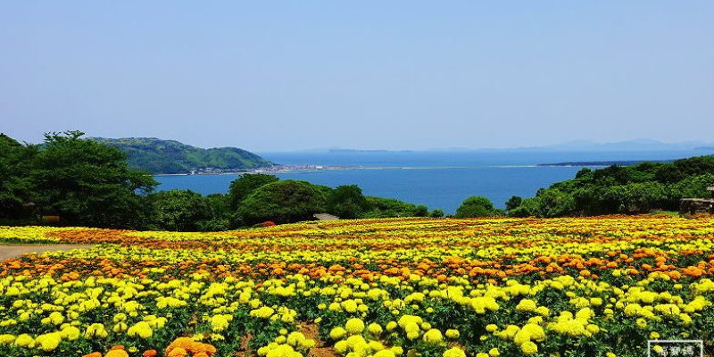 [九州福岡親子景點] 能古島花與海的邂逅,一年四季都能賞花,擁抱無邊際海景(含交通)