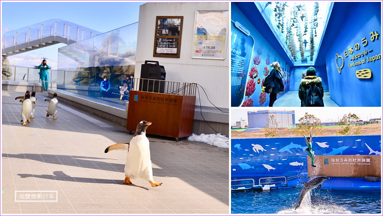【仙台景點】仙台海洋森林水族館 仙台うみの杜水族館,爆走企鵝遊行、企鵝餵食