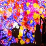 【限定優惠門票】台北teamLab未來遊樂園 & 與花共生的動物們 展覽主題攻略
