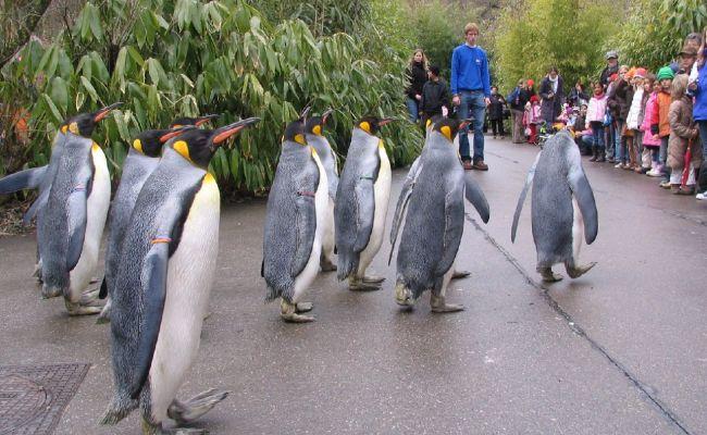 Photos From The Zurich Zoo Zoological Garden Switzerland