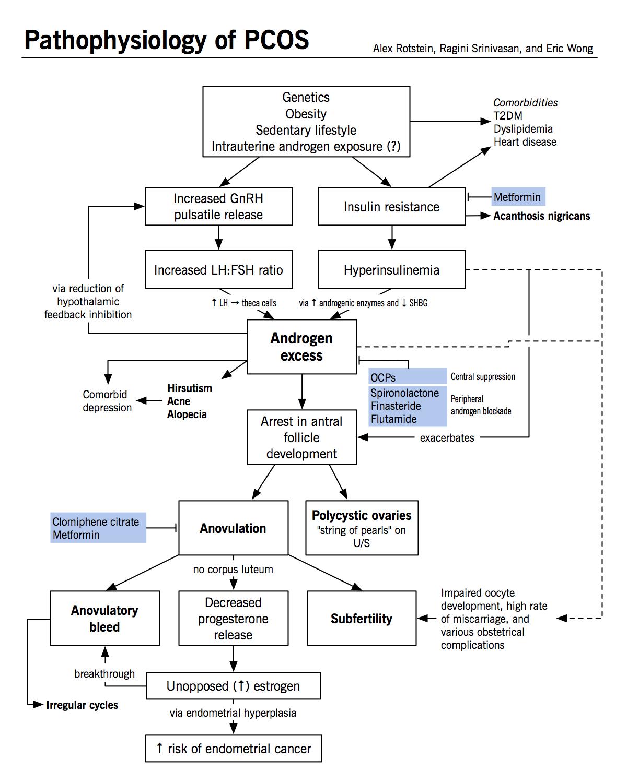 Pathophysiology Of Polycystic Ovarian Syndrome Pcos