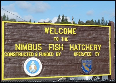 Image result for nimbus fish hatchery