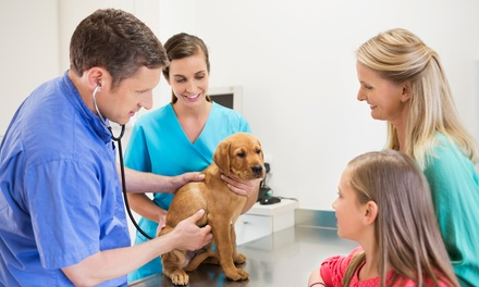 Choice of Pet Check Up at Canadian Veterinary Clinic Dubai