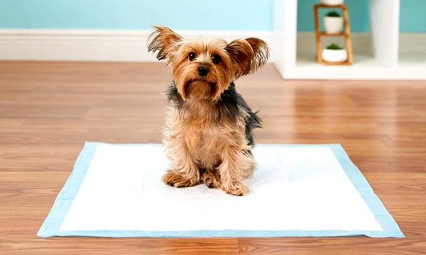 pack de 100 ou 200 tapis absorbant pour chien pet amore