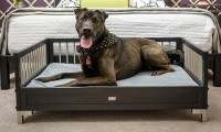 ecoFLEX Raised Dog Bed with Memory Foam Cushion | Groupon