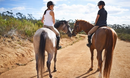 Up to Ten 45 Minute Horse Riding Lessons at Hobbies Club