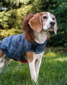 Eddie bauer hooded dog coat with fur trim also groupon rh