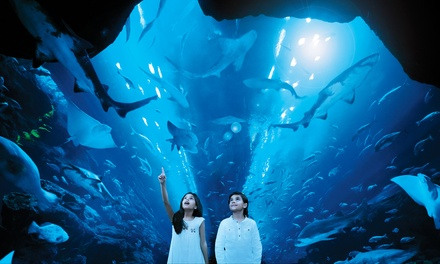 Up to Four Dubai Aquarium & Underwater Zoo Experience at Dubai Mall (21% Off)