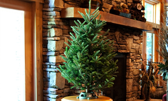 Fresh Cut 34 Foot Christmas Tree With Stand Groupon