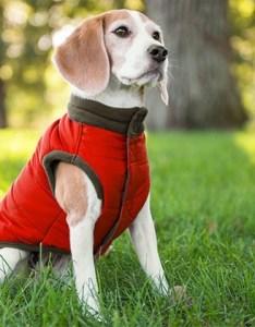 Eddie bauer puffer dog vest with fleece lining also groupon goods rh
