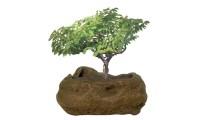 Bonsai Rock Garden | Groupon Goods