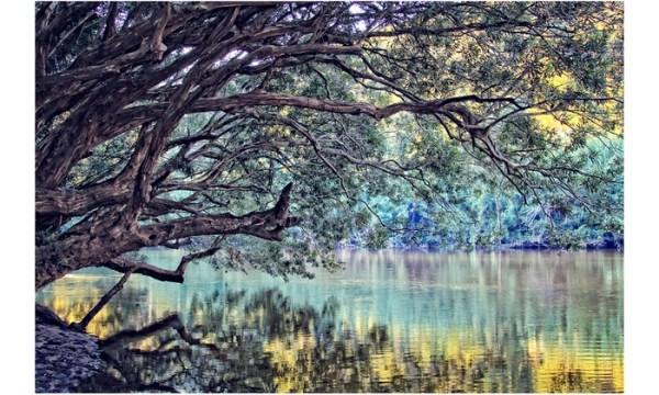 Nature Photography Prints Groupon Goods