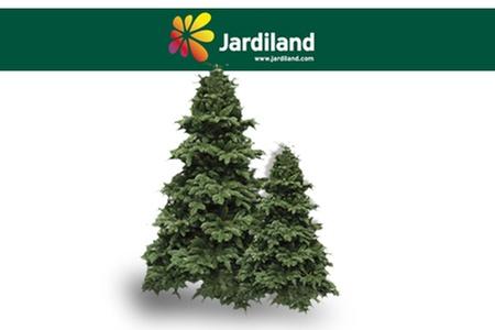 un sapin nordmann d une taille de 150 175 cm a 24 au lieu de 39 90 chez jardiland forbach