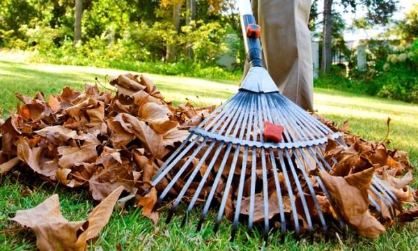 leaf removal - solution