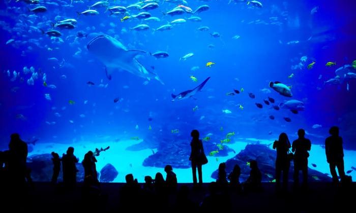 Georgia Aquarium General Admission