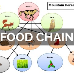 Savanna Food Chain Diagram Kfi Winch Contactor Wiring Forest Biome Web Foodfash Co