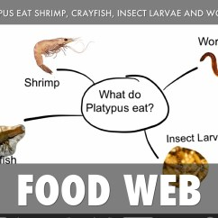 Platypus Life Cycle Diagram 3 Phase Wiring