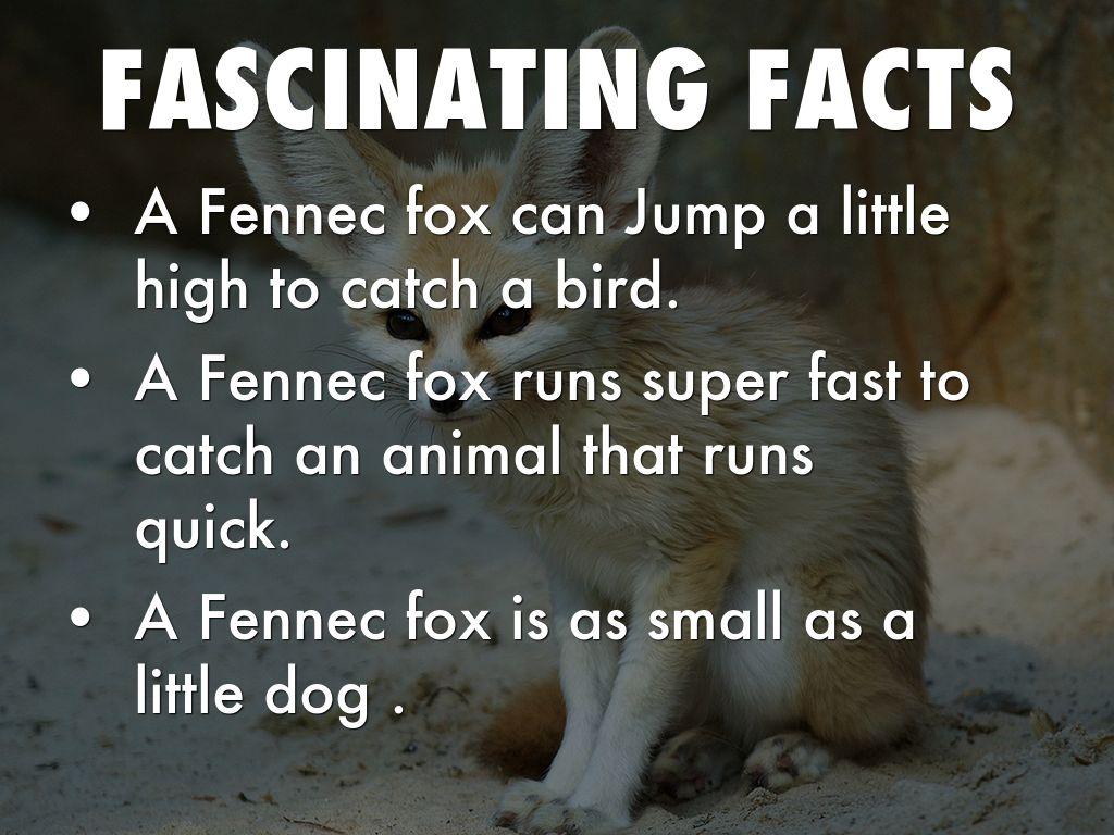 Fennec Fox By Joel By Lynn Woodhead