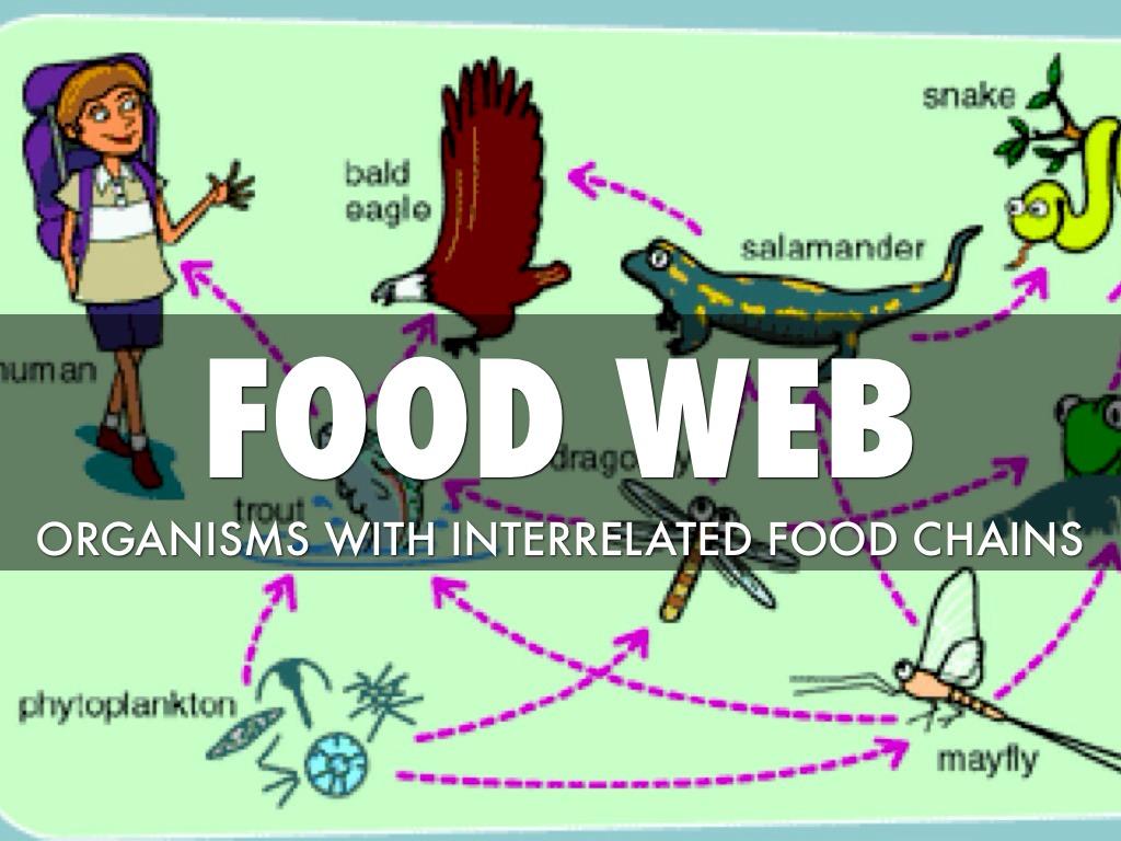 Haiku About Food Webs