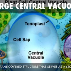 Plant Cell Diagram Vacuole Single Phase Capacitor Run Motor Wiring Parts By Marianah Davis
