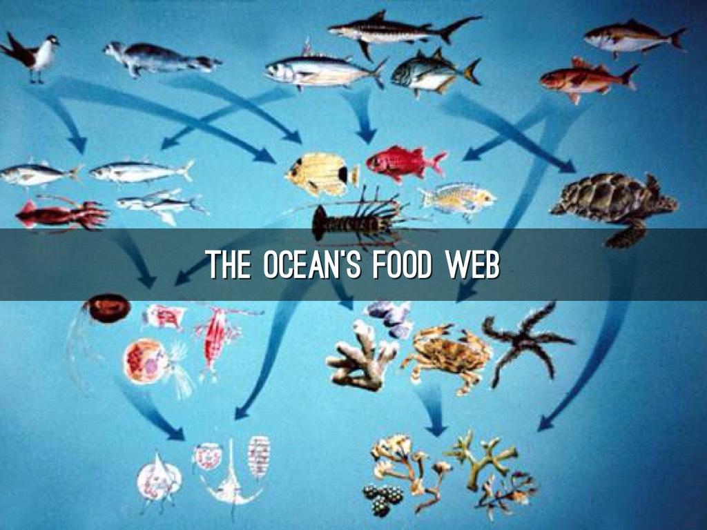 Ocean Ecosystem By Riley Minteer