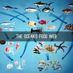 Pacific Ocean Food Web Diagram Heil Air Handler Wiring Ecosystem Pictures To Pin On Pinterest