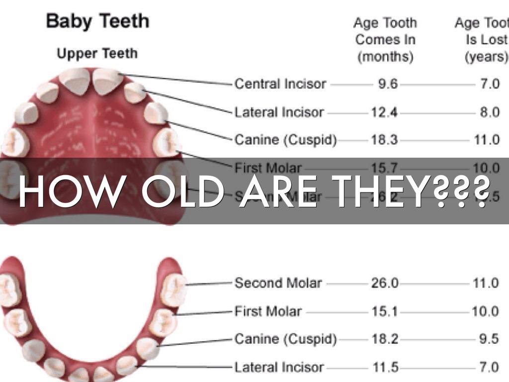 tooth diagram with names trailer 12n wiring of teeth