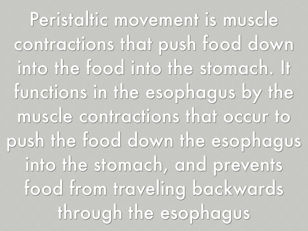 Esophagus And Stomach By Aubreyms