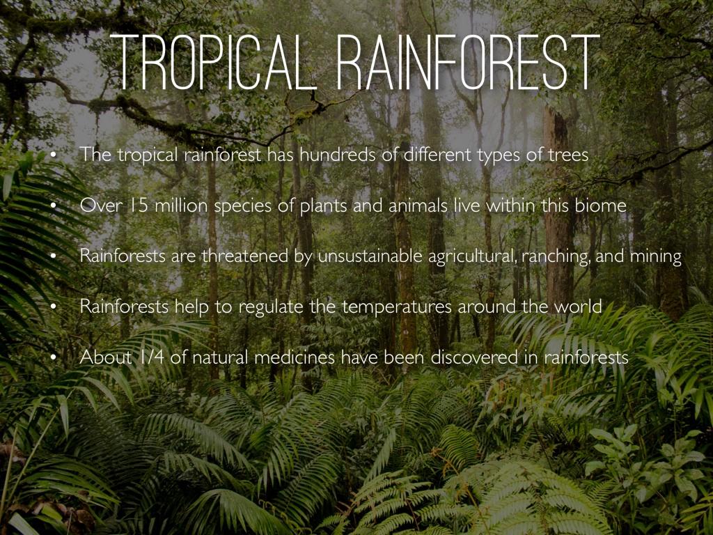 Tropical Rainforest By Sophie Catanzaro
