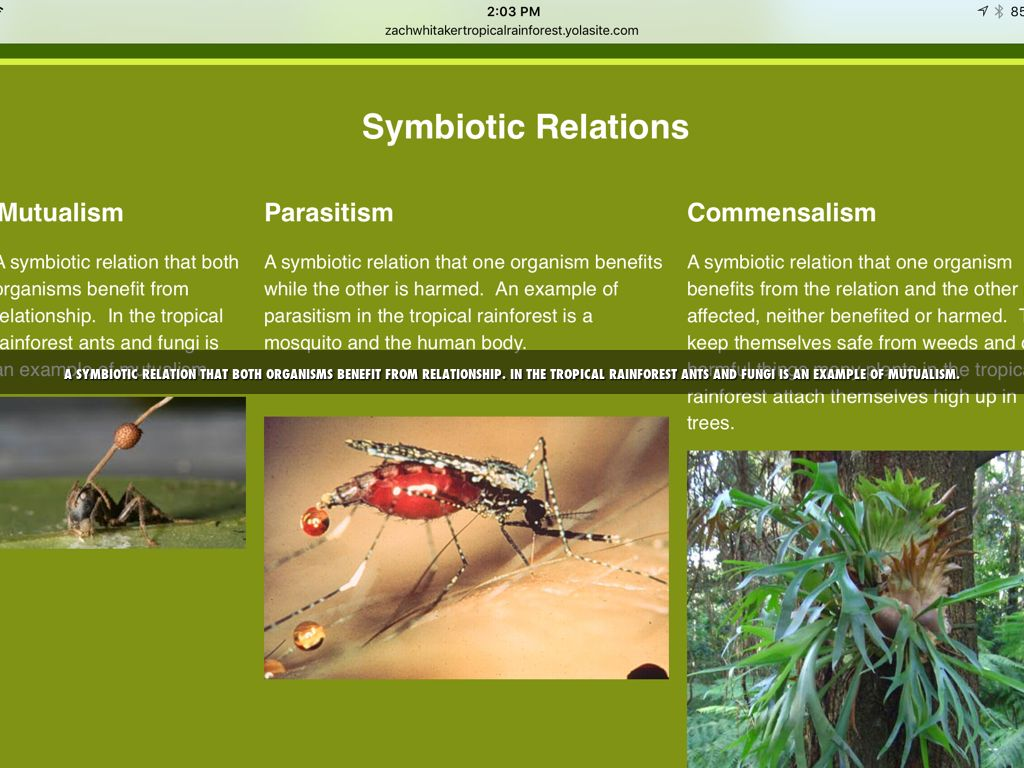 Examples Of Parasitism Relationships In The Tropical