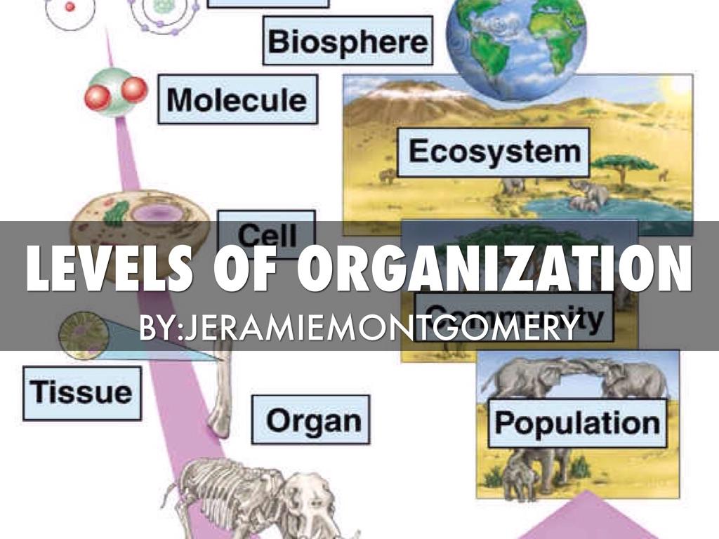 Levels Of Organization By Jeramie Montgomery