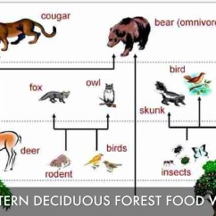 Taiga Food Web Diagram Beko Oven Wiring Coniferous Forest Chain