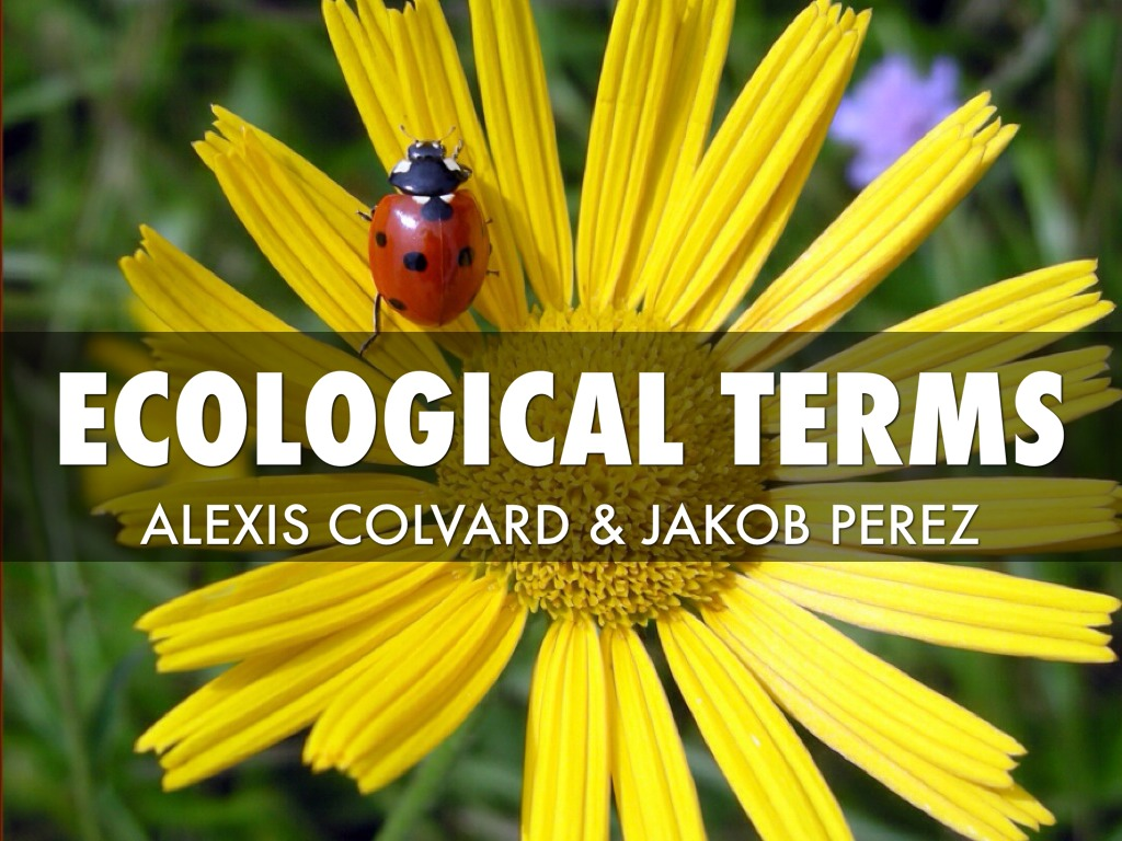 Ecological Terms By Alexis Colvard