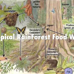 Tropical Rainforest Food Web Diagram 3 Way Switch Connection Biomes Of The World