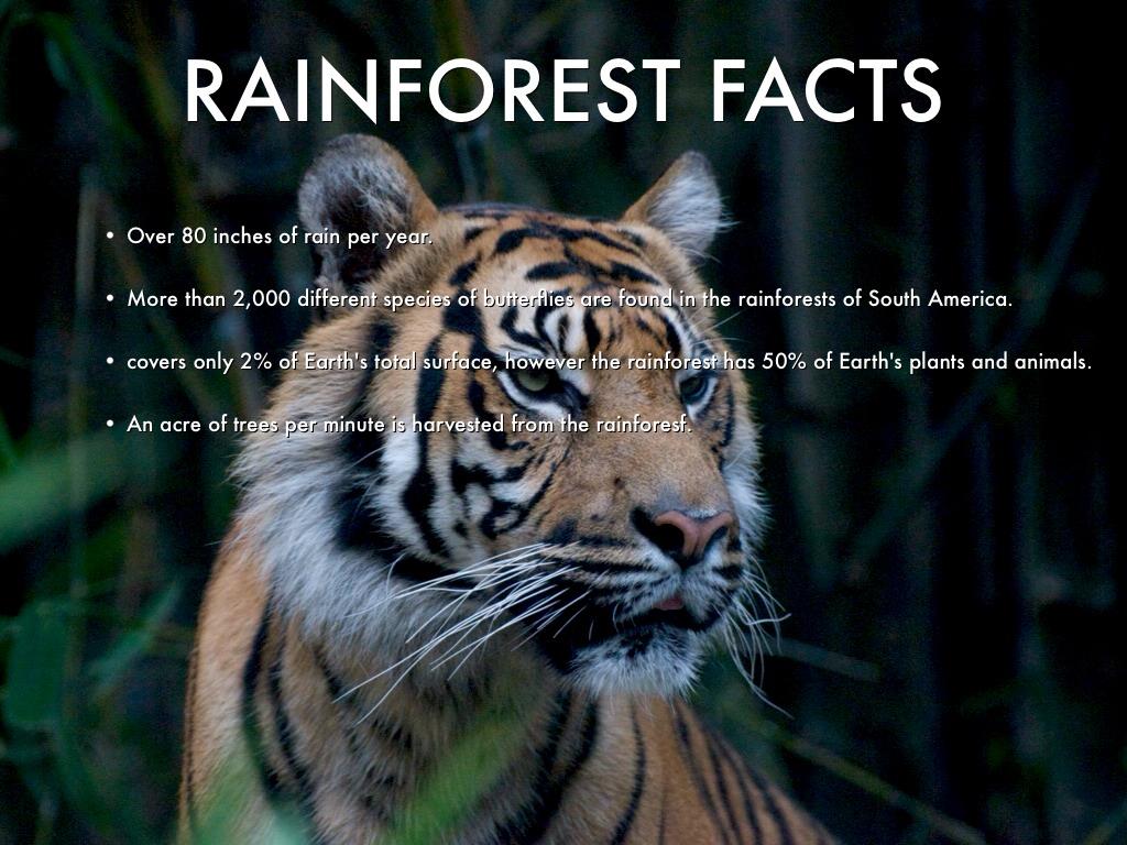 Rainforest Biomes By Erin O Rourke